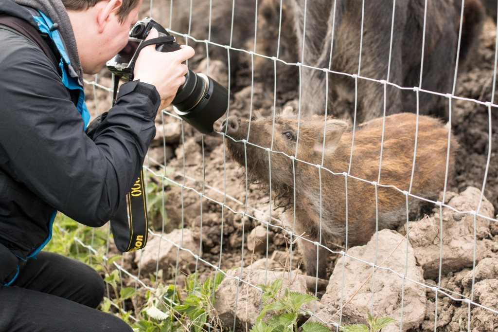 Wildlife photographer and baby boar botherer