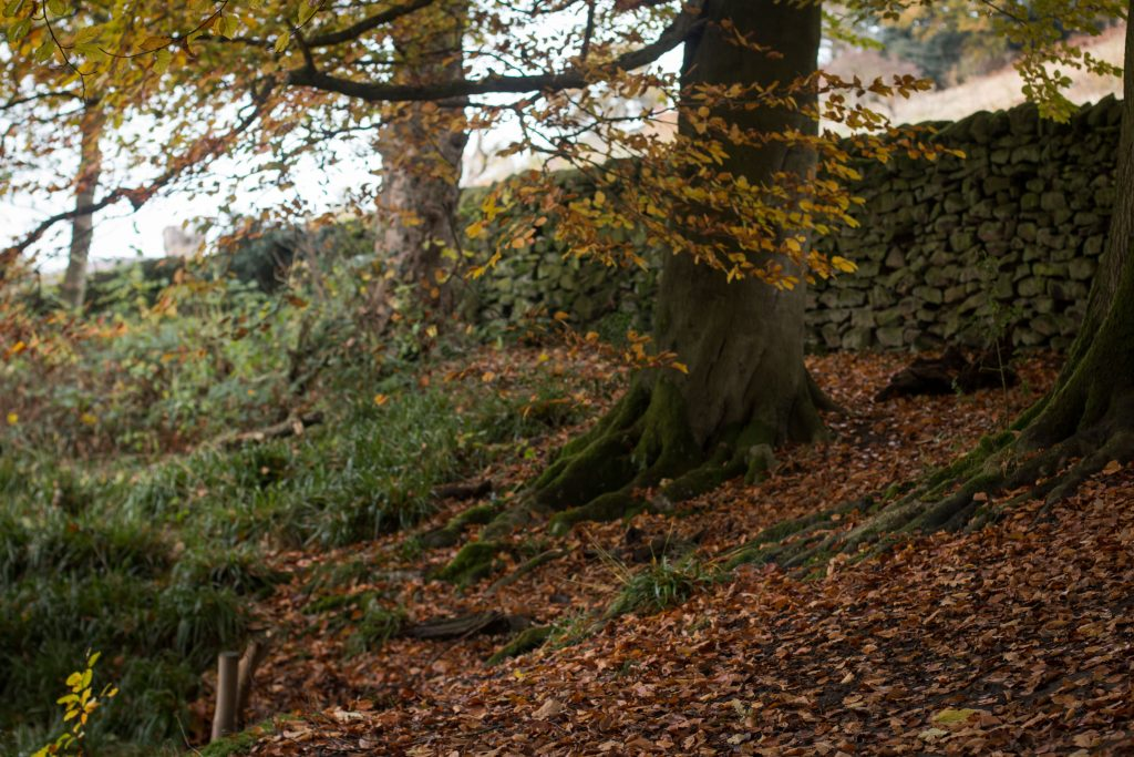 20161113_bolton-abbey-26