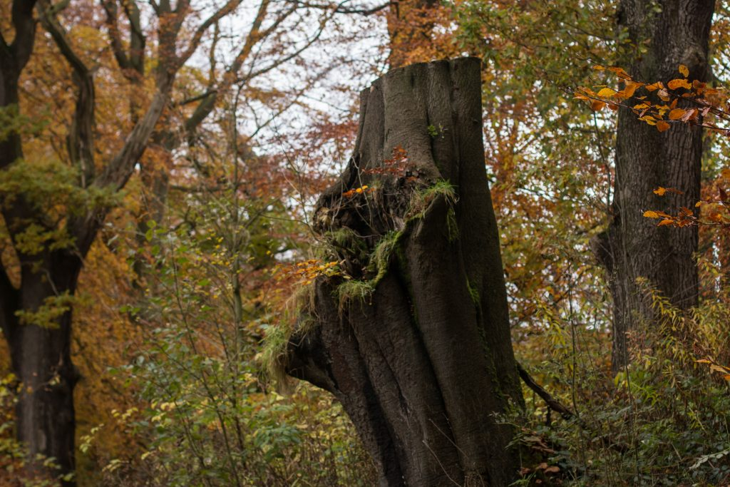 20161113_bolton-abbey-27