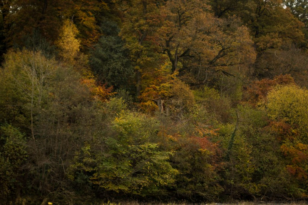 20161113_bolton-abbey-33